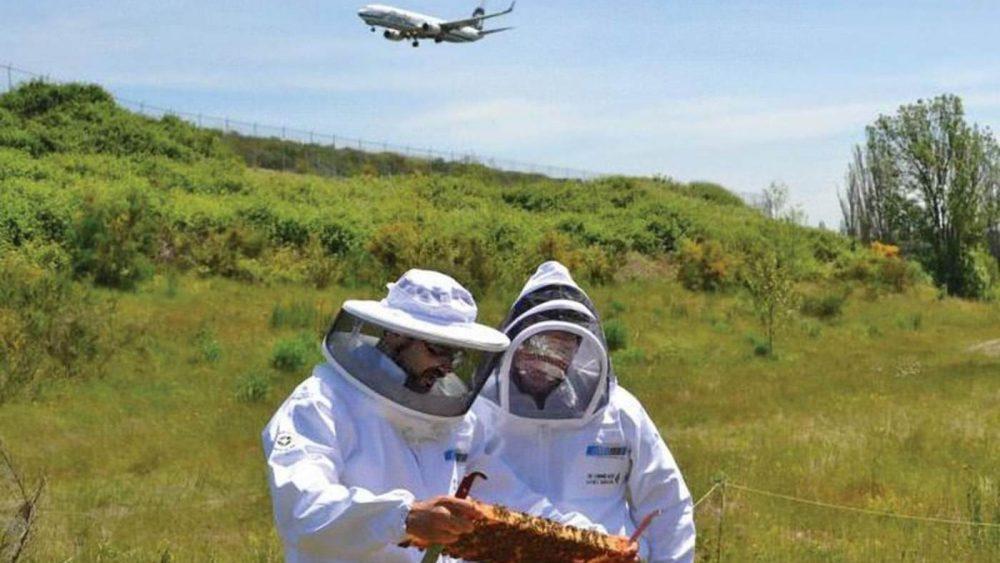 Aeropuerto Internacional ayuda a apicultores a salvar a las abejas