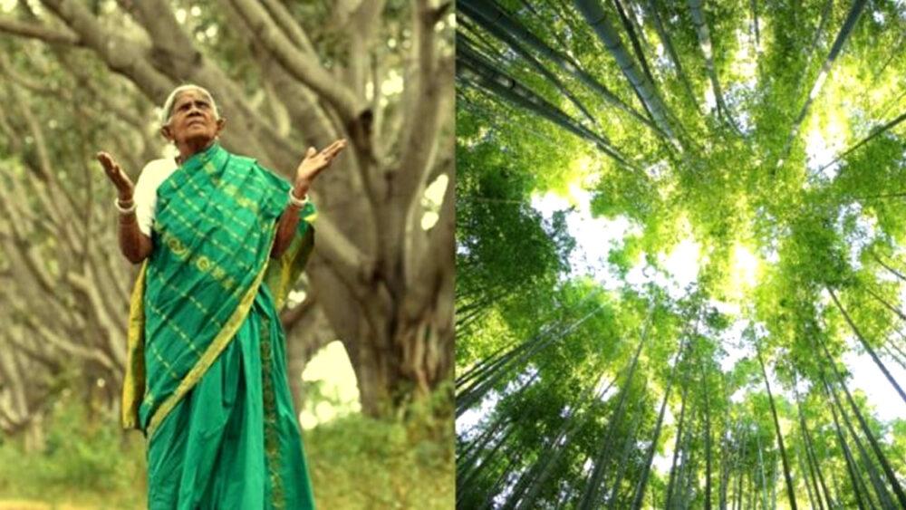 No tuvo hijos pero plantó miles de árboles en la India por más de 70 años