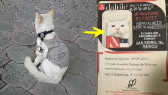 Wero, el gato callejero adoptado por una empresa ¡y que también usa fotocheck!